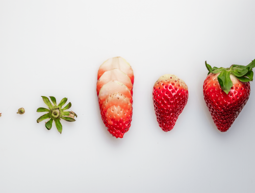 knolling strawberries fresas diseccionadas ponona cakes and photography